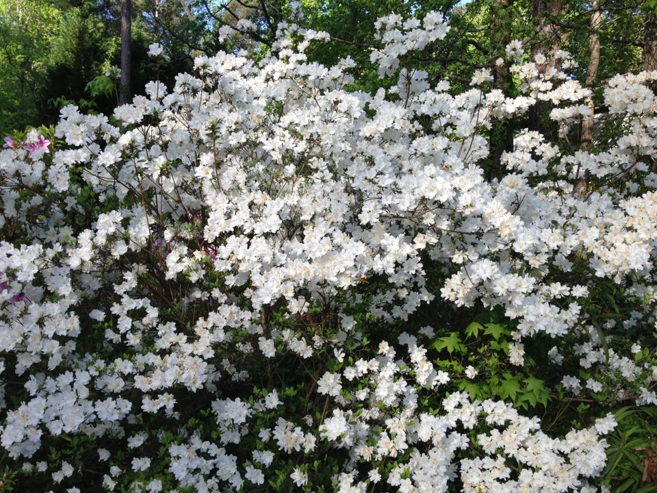Atlanta Spring