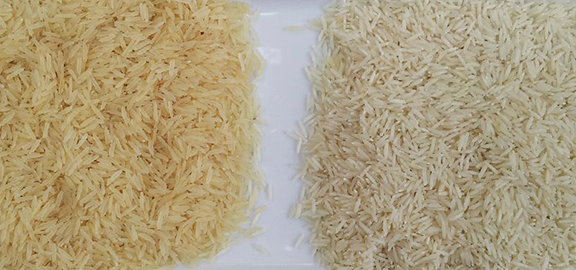 Sela (Parboiled) rice on the left and basmati rice on the right. You can see that sela has a yellowish color and a much longer grain. It also absorbs a lot of water while soaking.
